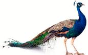 bruun-iversen.dk logo